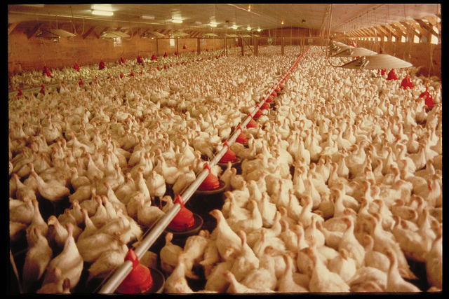 poultry quality assurance is made easier with advanced spectrophotometry