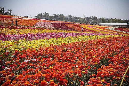 tools for advanced color analysis are particularly useful for large growing fields