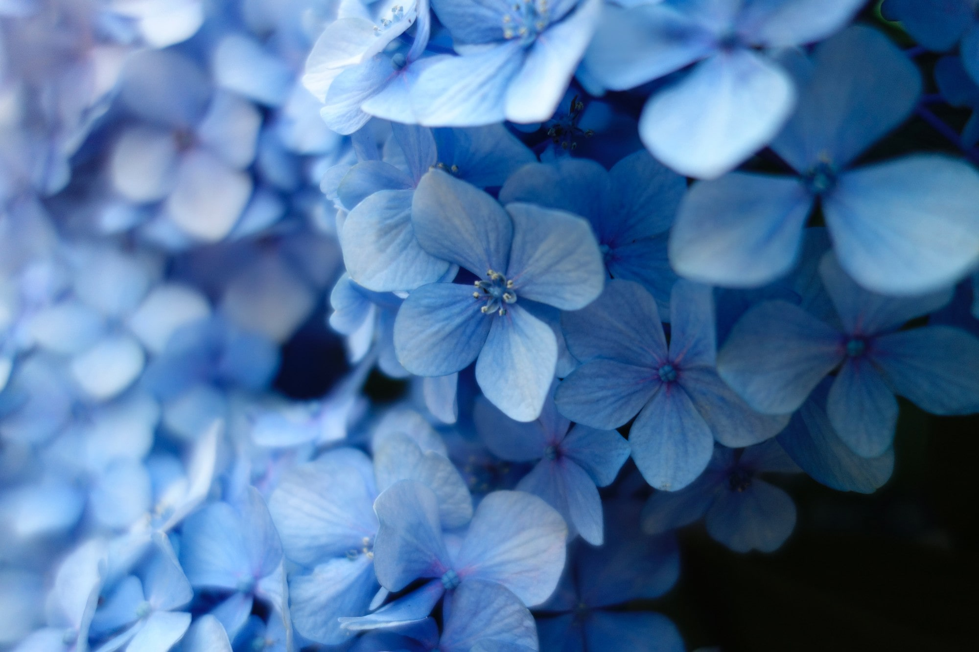 The Color Blue — History, Meaning and Facts